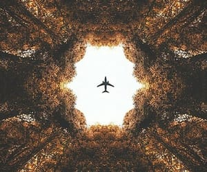 plane, travel, and tree image