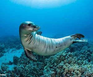 animals, nature, and seal image