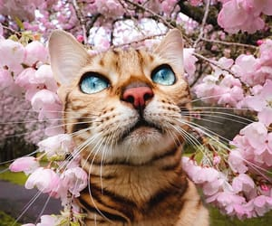 cat, aesthetic, and nature image