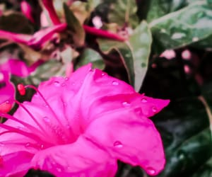 beauty, flowers, and rain image