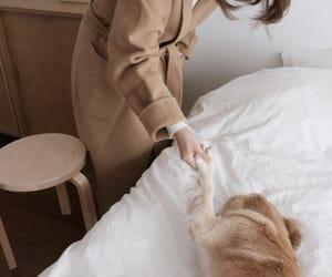 animals, dog, and korean image