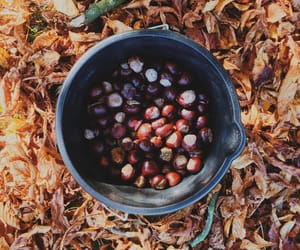 artsy, autumn, and autumnal image