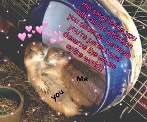 cute, love, and animal image