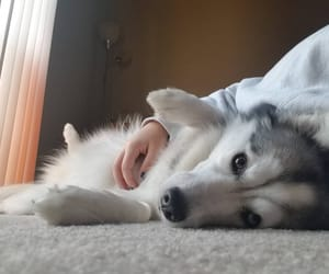 cozy, cuddles, and dog image