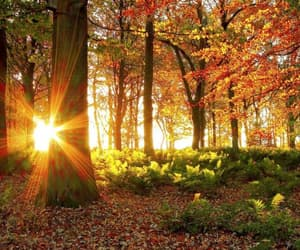autumn, sunlight, and trees image
