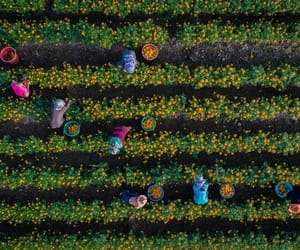 aerial photography, aerial view, and farming image