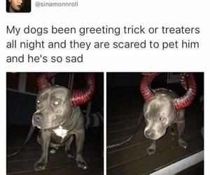 dog, animal, and awesome image