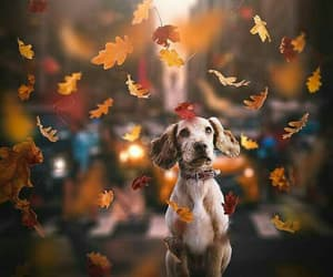autumn, dog, and leaves image