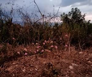alone, autumn, and drama image
