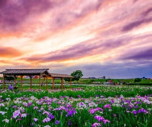 clouds, japan, and flowers image