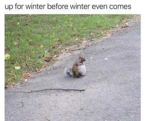 funny animals meme image