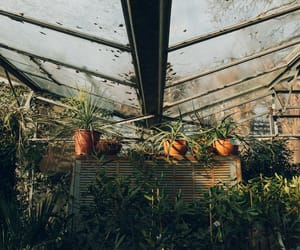green, lovely, and green house image