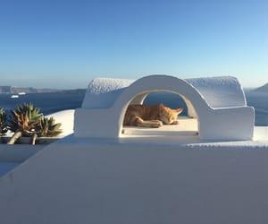 cat, Island, and santorini image