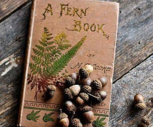 book, nature, and fern image