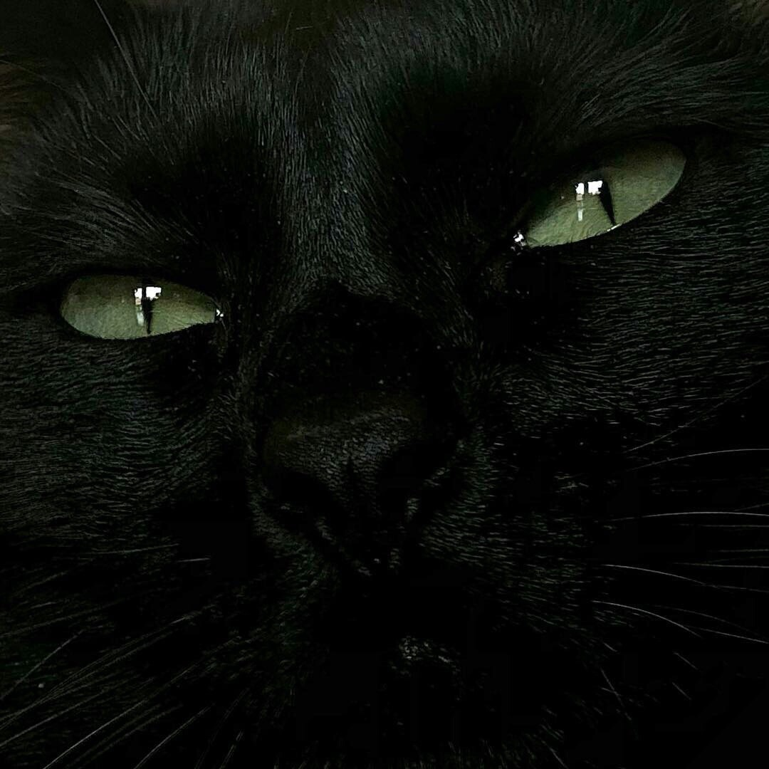 aesthetic, black cat, and green eyes image