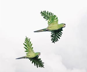 art, green, and parrot image