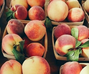 fruit bowl, fruit salad, and apricot image