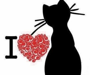 amor, gato, and gif image