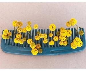 comb, flower, and flowers image