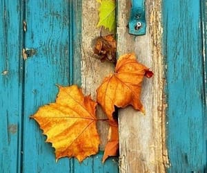 autumn, door, and leaves image