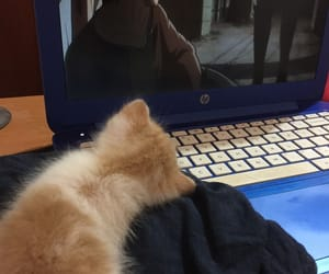 anime, bebe, and cat image