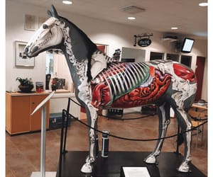 anatomy, equestrian, and horse image