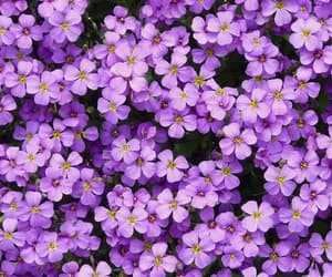 flowers, violet, and wallpaper image