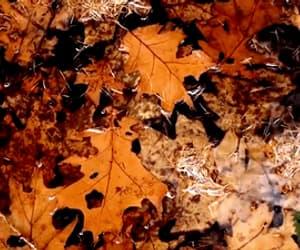 autumn, orange, and gif image