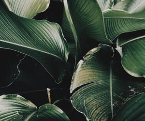 green, wallpaper, and plants image