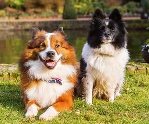 elo, süß, and hund image