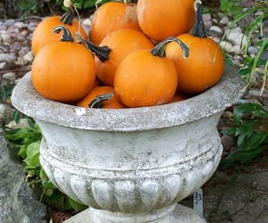 autumn, pumpkins, and sweaters image