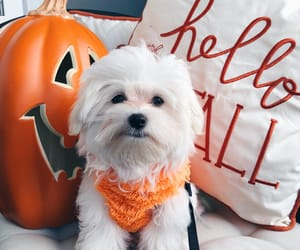 autumn, baby, and dog image