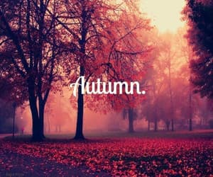 autumn, hello autumn, and nature image