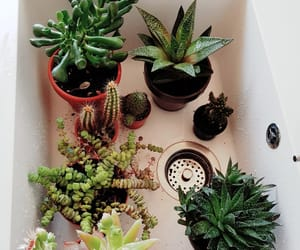 aesthetic, cacti, and green image