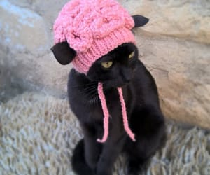 cat, cats, and etsy image