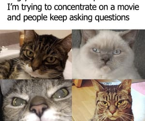 funny movies cats image