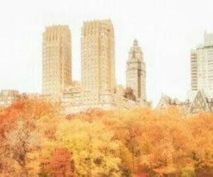 aesthetic, fall, and orange image