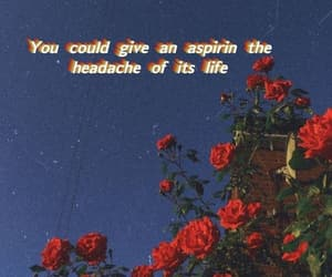 aesthetic, flowers, and Lyrics image