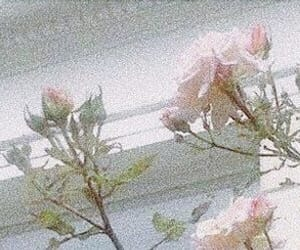 header, twitter, and flowers image