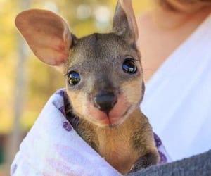 kangaroo, cute, and animal image