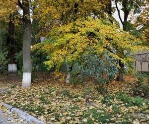 осень, киев, and листочки image