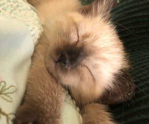 cutie, gatito, and kitten image