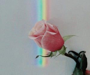 rainbow, rose, and flowers image