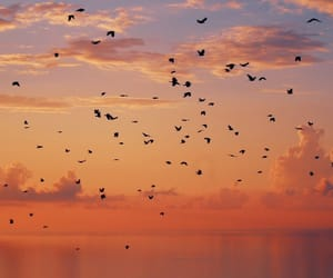 birds, clouds, and freedom image
