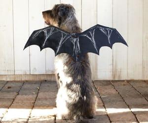 autumn, costume, and dog image