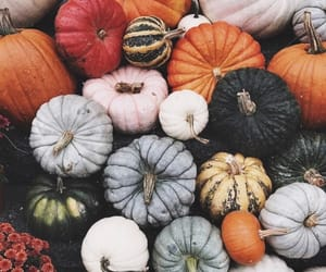 fall, gourd, and pumpkin image