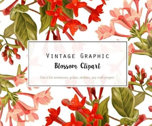 vintage wedding, vintage flower, and flower image image