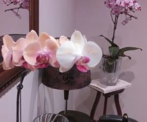 design, orchids, and flowers image