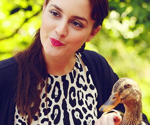 gossip girl, blair waldorf, and duck image