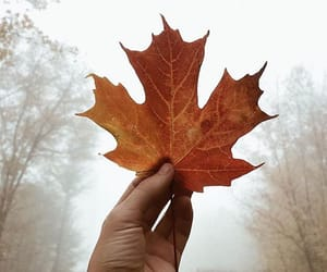 automne, autumn, and fall image